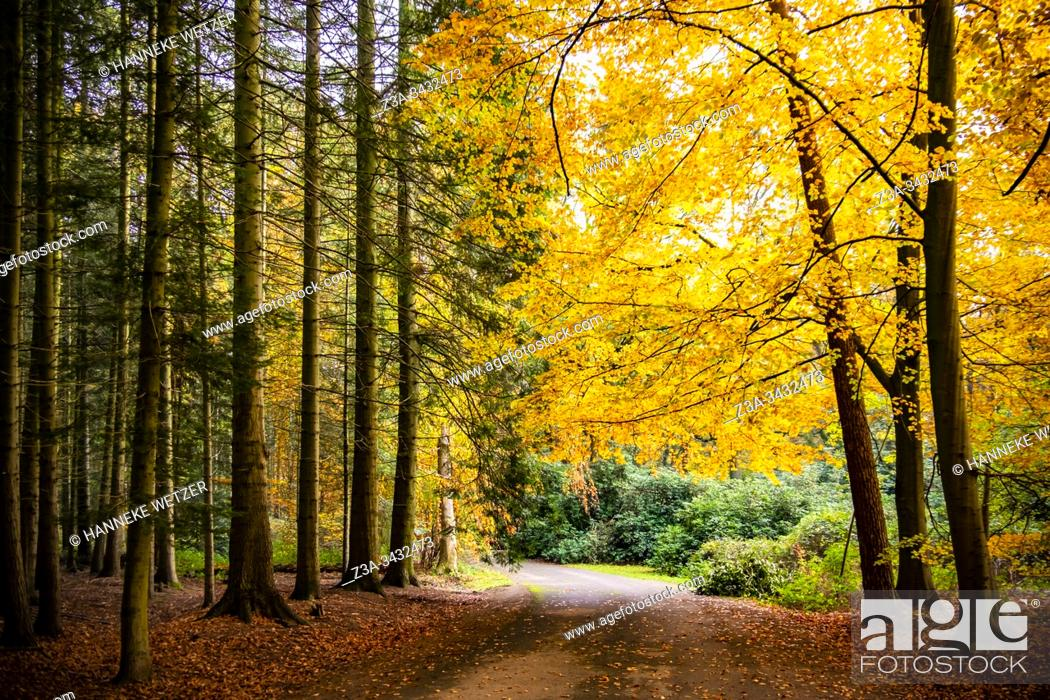 Stock Photo: Colorful autumn forest, Philips de Jongh Park, Eindhoven, The Netherlands, Europe.