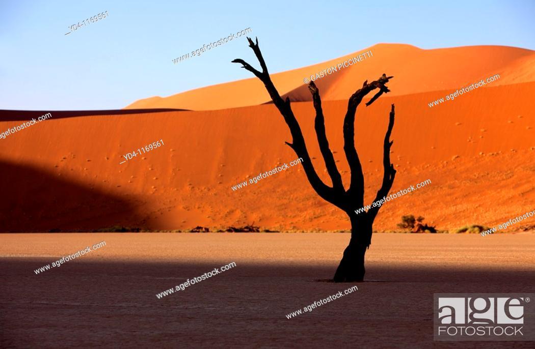 Stock Photo: Camelthorn dead tree Acacia erioloba, Dead Vlei, Namib-Naukluft Mational Park, Namib desert, Namibia.