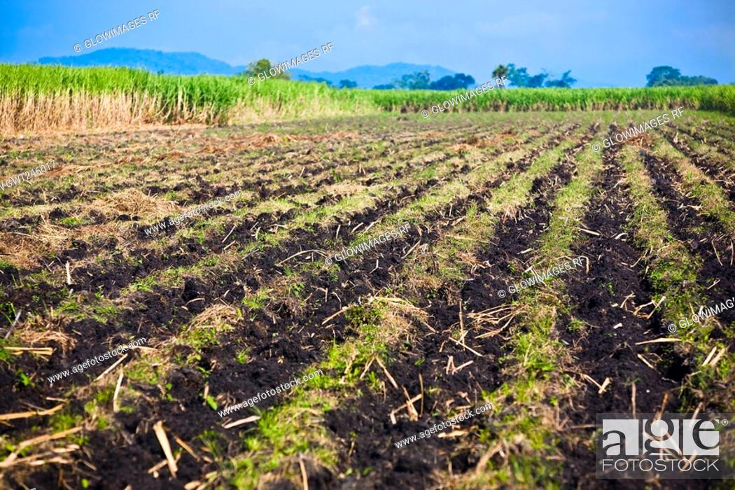 Stock Photo: Panoramic view of a plowed field, Tamasopo, San Luis Potosi, Mexico.