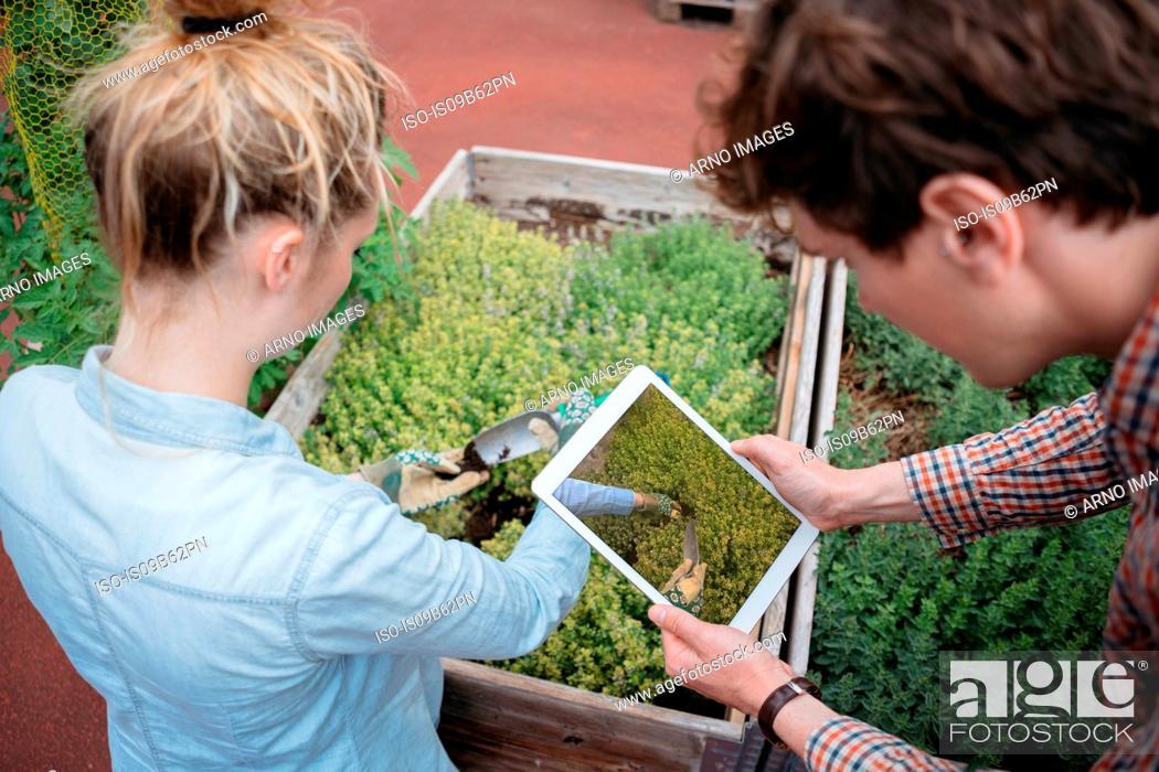 Stock Photo: Man using digital tablet to photograph woman gardening.