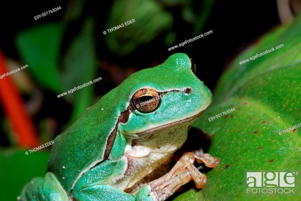 Stock Photo: close up green frog.