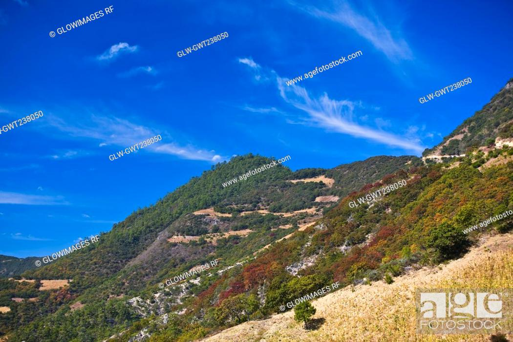 Stock Photo: High angle view of trees on a hill, Hierve El Agua, Oaxaca State, Mexico.