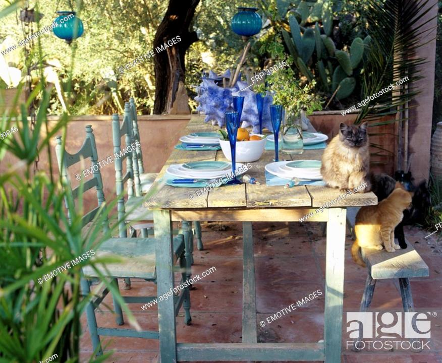 Stock Photo: Setted table on the terrace with cats.