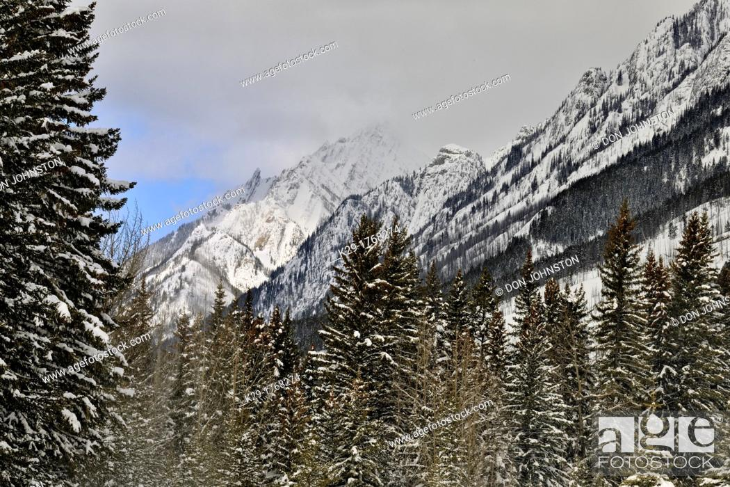 Stock Photo: Fresh snow in the Bow Valley, Banff National Park, Alberta, Canada.