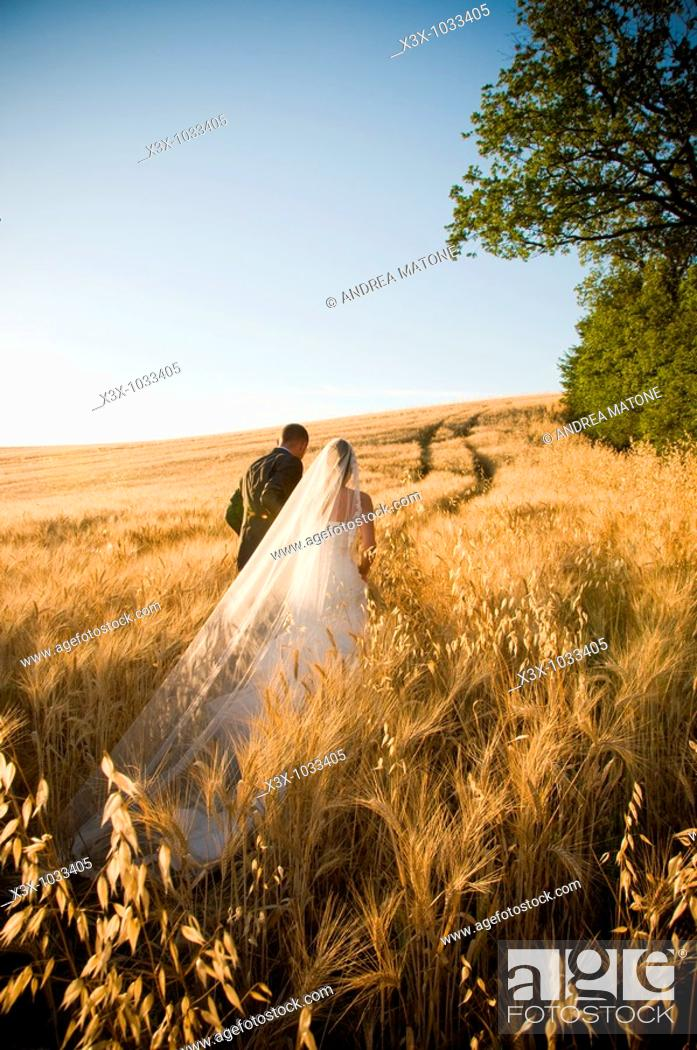 Stock Photo: Newlyweds walking in wheat field in Umbria, Italy.