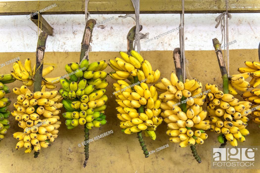 Stock Photo: Bundles of bananas hung for sale at outdoor market, Rwanda Farmers Market, in Rwanda.
