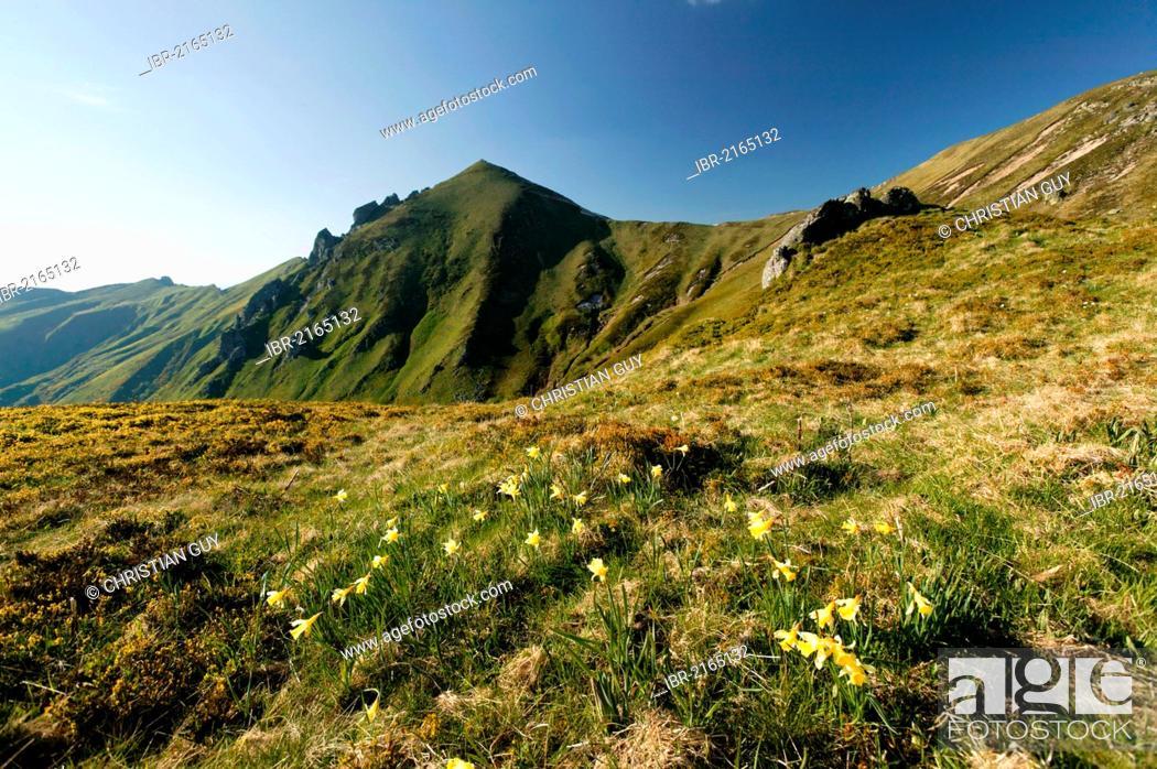 Stock Photo: Massif du Sancy, Parc Naturel Regional des Volcans d'Auvergne, Regional Nature Park of the Volcanoes of Auvergne, Monts Dore, Puy de Dome, France, Europe.