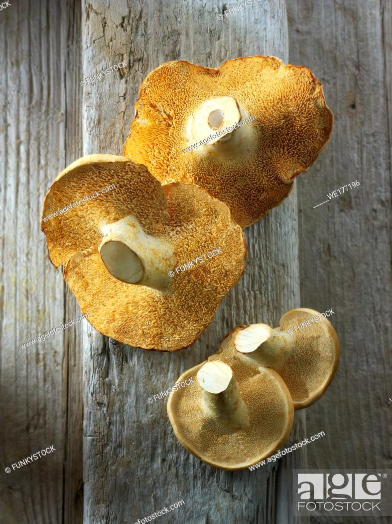 Stock Photo: Fresh picked wiild organic Pied de Mouton Mushrooms (hydnum repandum) or hedgehog mushrooms.