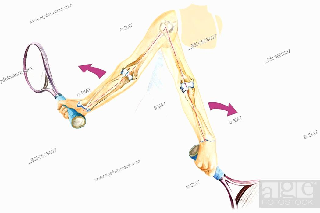Elbow Drawing Pronation Of The Elbow This Images Shows How The Two
