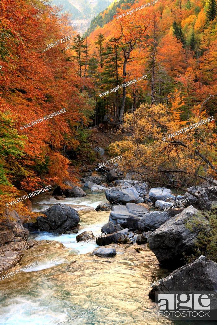 Imagen: Landscape in autumn of Arazas river in the Ordesa valley. Huesca.