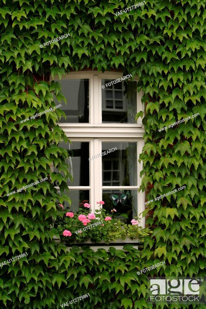 Stock Photo: window, glass, reflection, bloom, blossom, flowers.
