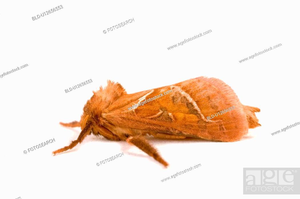 Stock Photo: wiesenbewohner, freigestellt, alfred, animal, animals, butterflies.