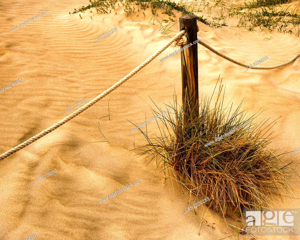 Stock Photo: Dunes, Canet de Berenguer Beach, Valencia, Spain.