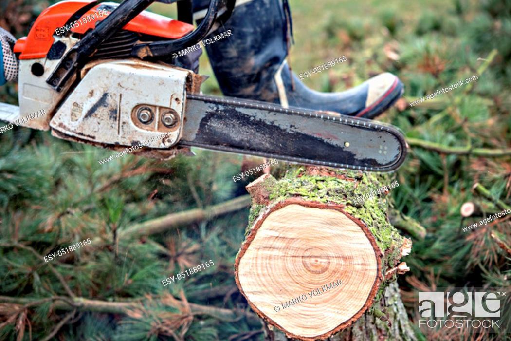 Stock Photo: lumberman with worn chainsaw cutting wood.