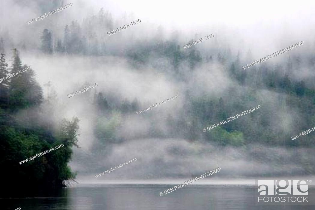 Imagen: Fog covered trees covered in a forest, Fiordland Recreation Area, Fiordland Conservancy, British Columbia, Canada.