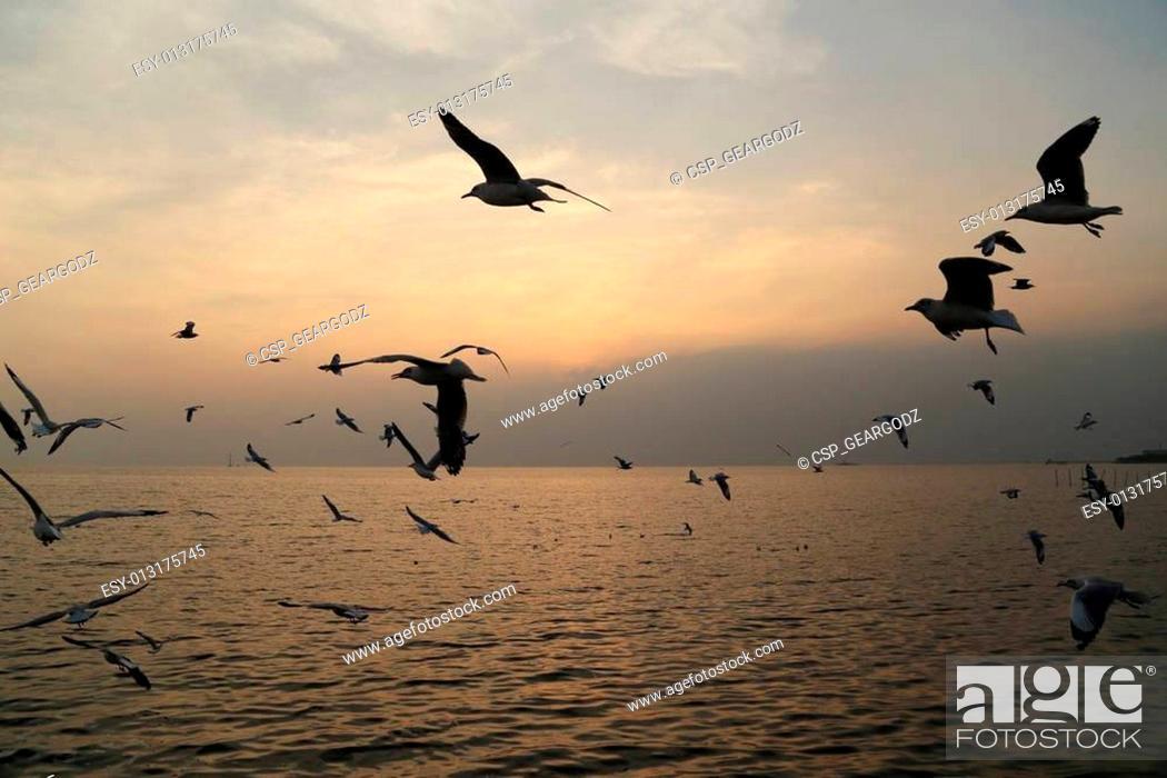 Stock Photo: Seagull with sunset at Bang Pu beach.