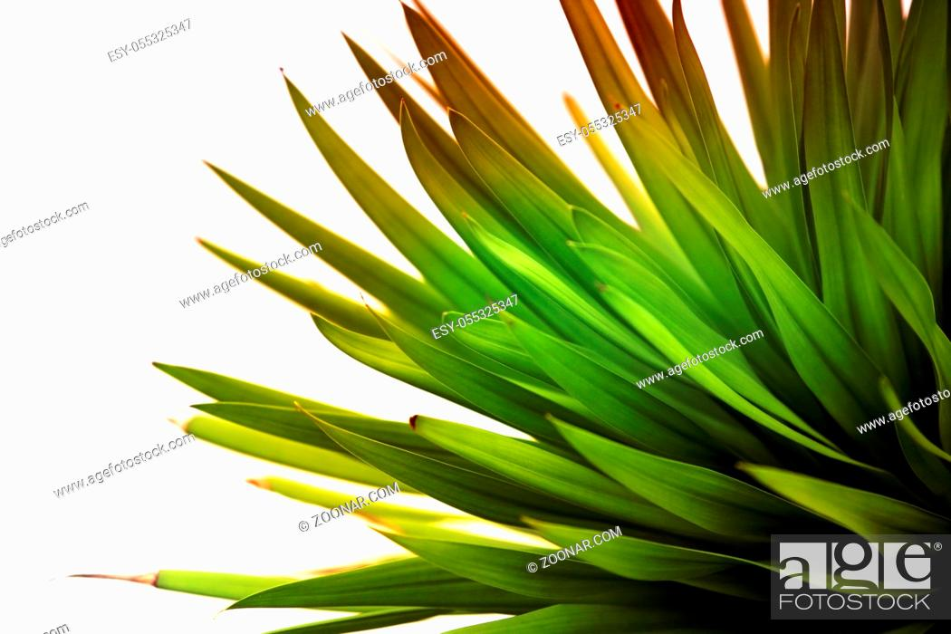 Stock Photo: Green leafs for background, soft focus.