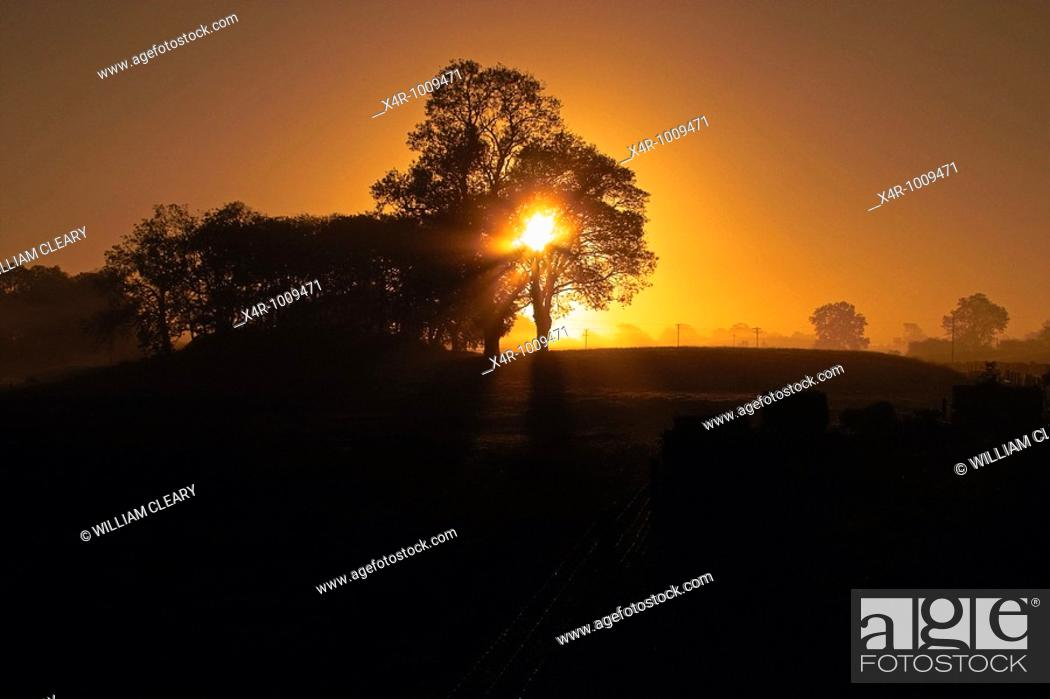 Stock Photo: Sunrise through the trees, underexposed to give silohuette effect.