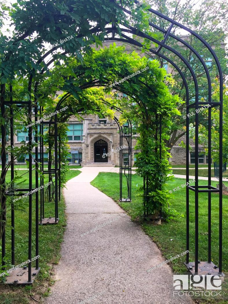 Photo de stock: Wisteria vines climb on metal arches. In summer months, with Wisteria blooming, it becomes a charming pathway, Ontario, Canada.