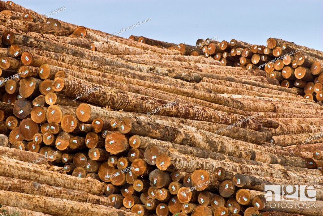 Stock Photo: Huge pile of softwood logs at sawmill, Coos Bay Oregon.