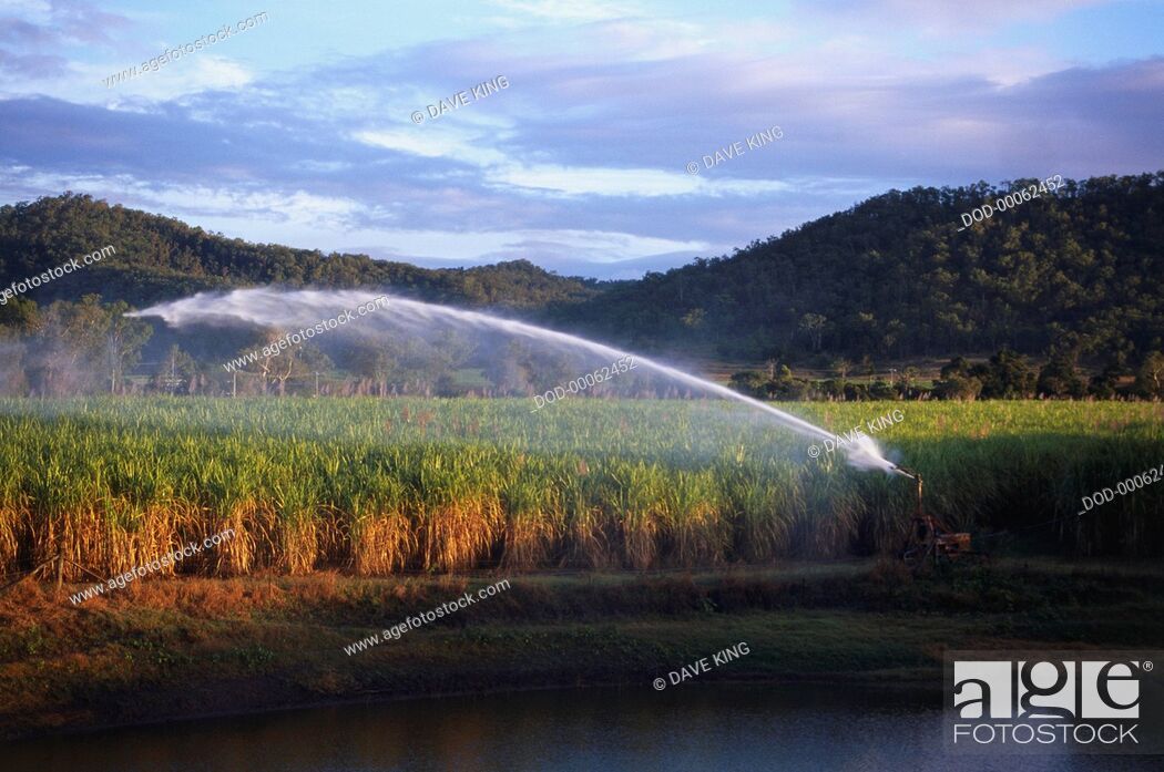 Imagen: Irrigating sugar cane fields, with a huge jet of water visible, in Mackaya, near Eungella National Park. Tree-covered hills are in the background and the sky is.