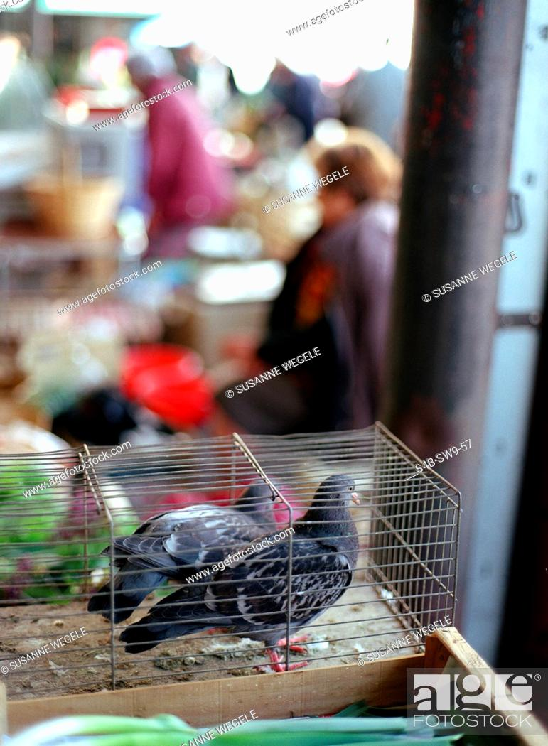 Stock Photo: Pigeons in Cage - Market.