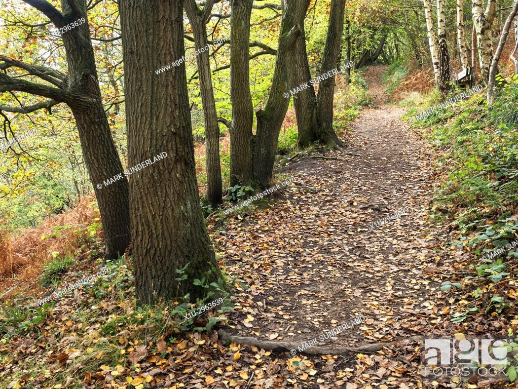 Imagen: Path through Spring Wood in Nidd Gorge Woods in Autumn Knaresborough North Yorkshire England.