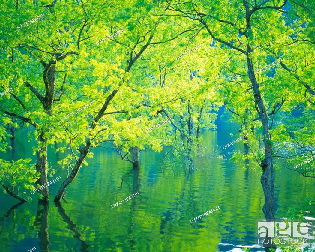 Stock Photo: Trees in Water, High Angle View, Pan Focus.