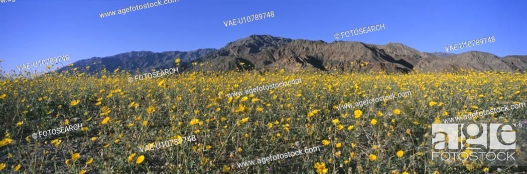 Stock Photo: Panoramic view of Death Valley National Park.