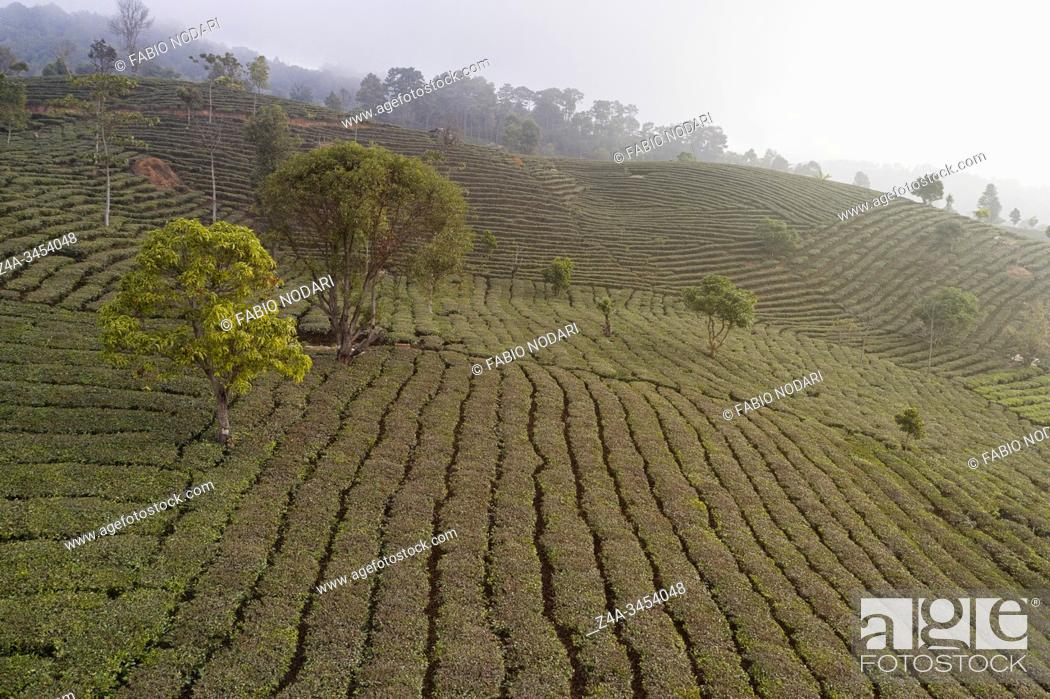 Imagen: Aerial view of a Pu'er (Puer) tea plantation in Xishuangbanna, Yunnan - China.