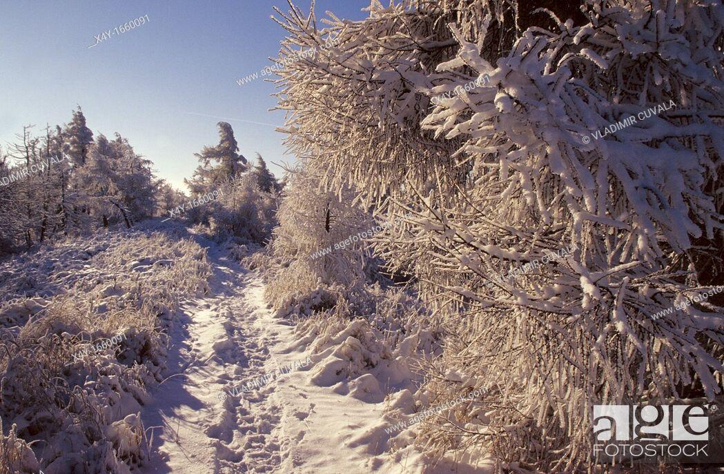 Stock Photo: Winter scenery at Vysoka, Male Karpaty, Slovakia.
