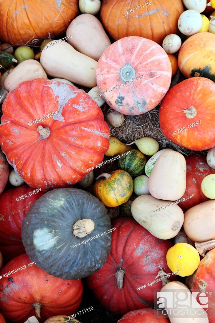 Stock Photo: Mixed Pumkins and Squashes, nr Robertson, Western Cape, South Africa.