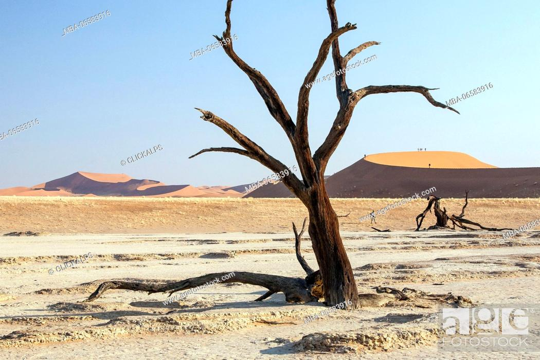 Stock Photo: Parched ground and Dead Acacia surrounded by sandy dunes Deadvlei Sossusvlei Namib Desert Naukluft National Park Namibia Africa.