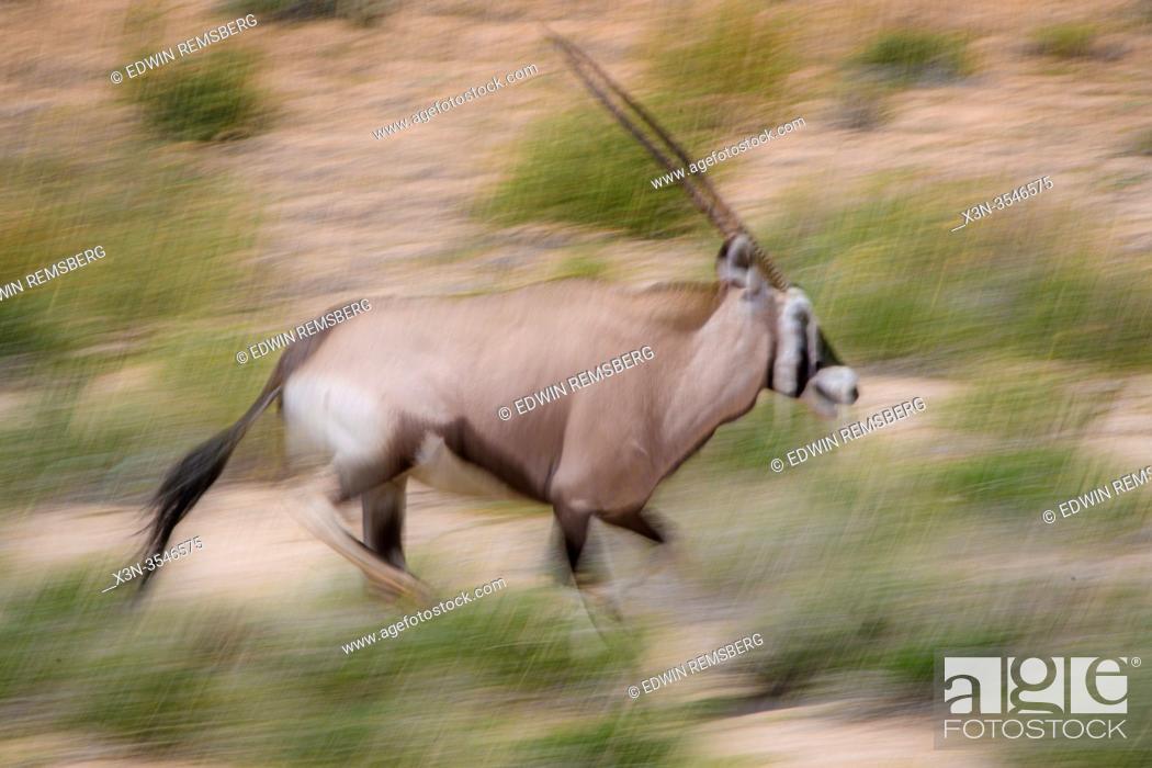 Imagen: Oryx (Gemsbok) Kgalagadi , South Africa.
