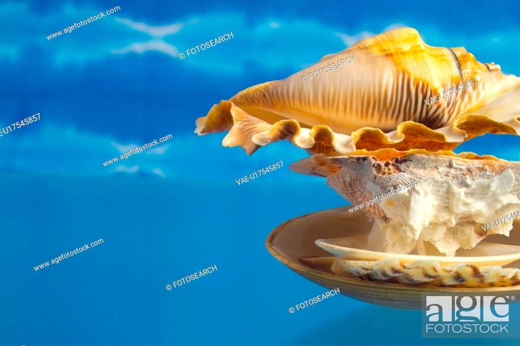 Stock Photo: mollucca, animal, mollusc, mollusks, mollusk, shellfish, shell.