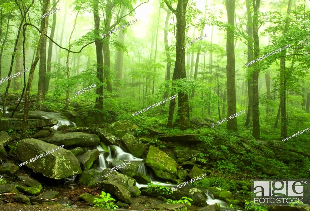 Imagen: Spring Landscape, Newfound Gap Rd, Great Smoky Mountains National Park, TN.
