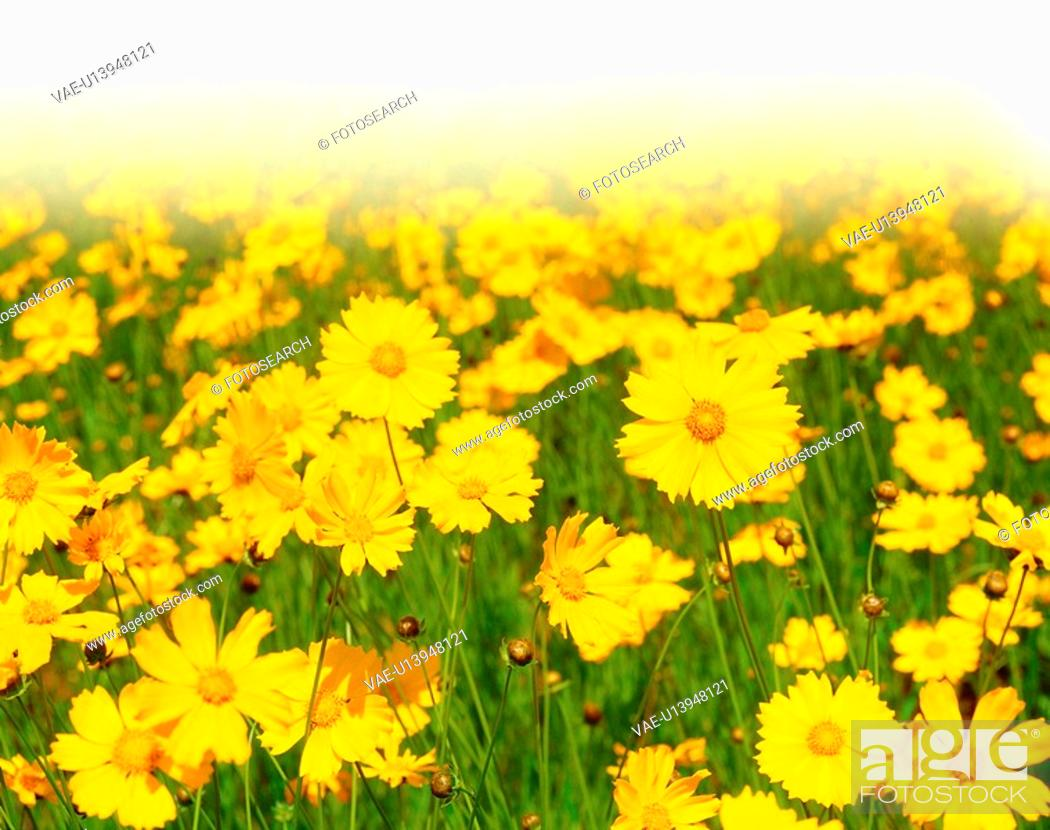 Stock Photo: plant, flowers, flower, plants, film.