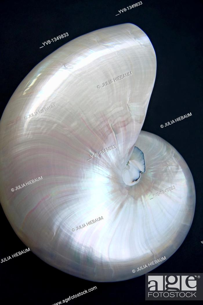 Stock Photo: Iridescent Nautilus Shell.