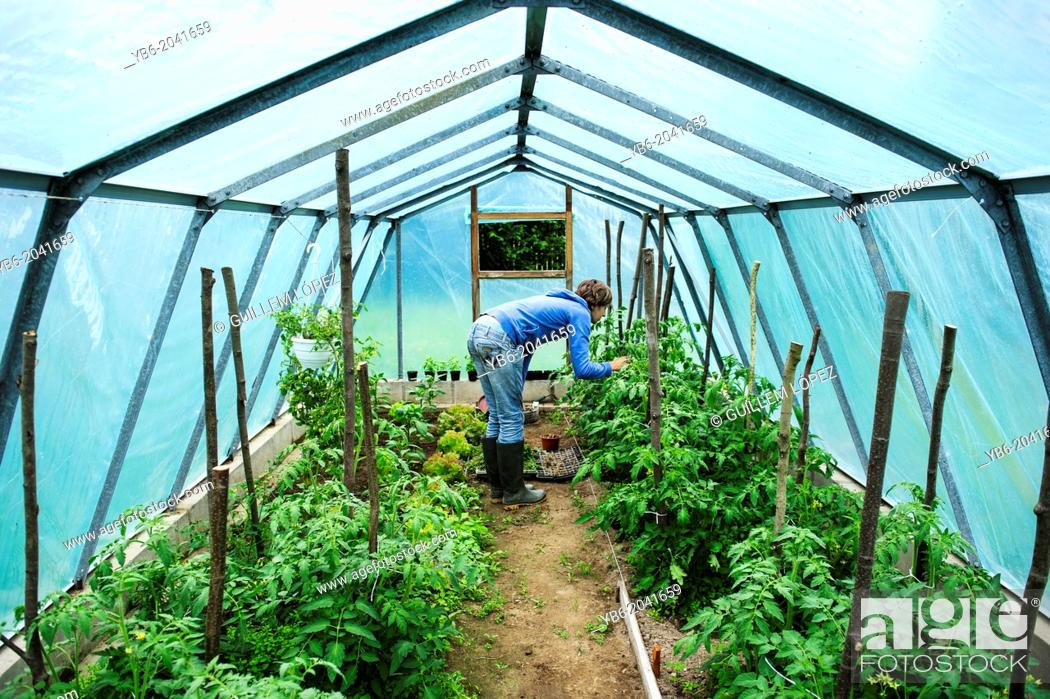 Stock Photo: A young adult woman working in greenhouse, Poland.