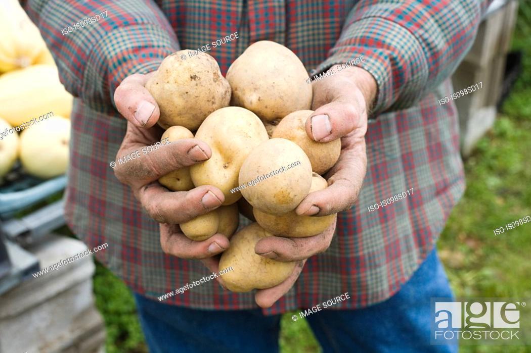 Stock Photo: Farmer holding potatoes.