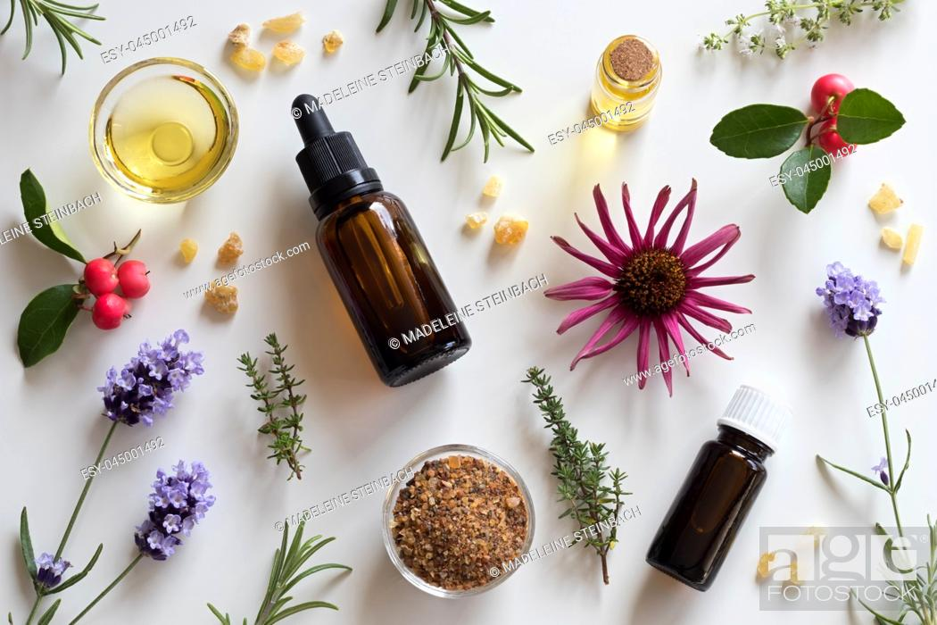 Stock Photo: Bottles of essential oil with rosemary, thyme, creeping thyme, echinacea, wintergreen, lavender, myrrh and frankincense on a white background.