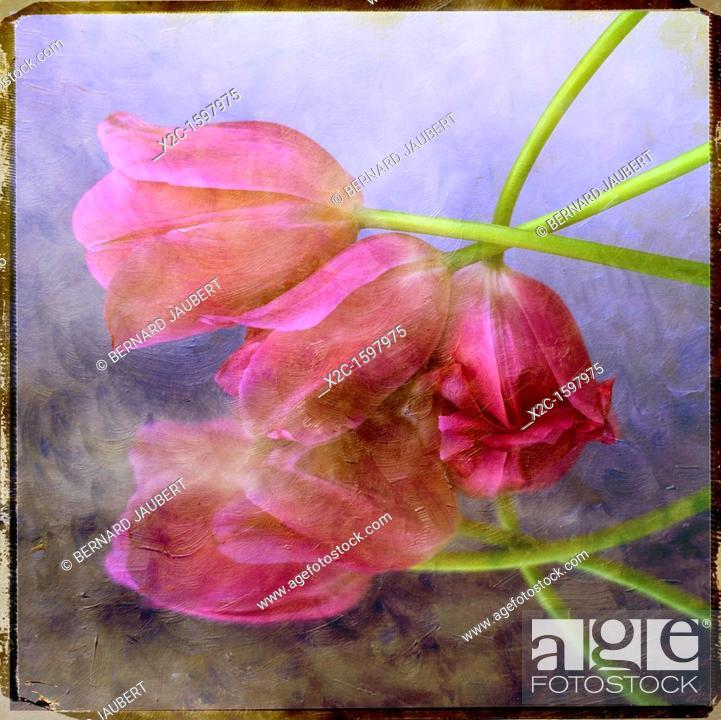 Stock Photo: Pink tulips, textured.