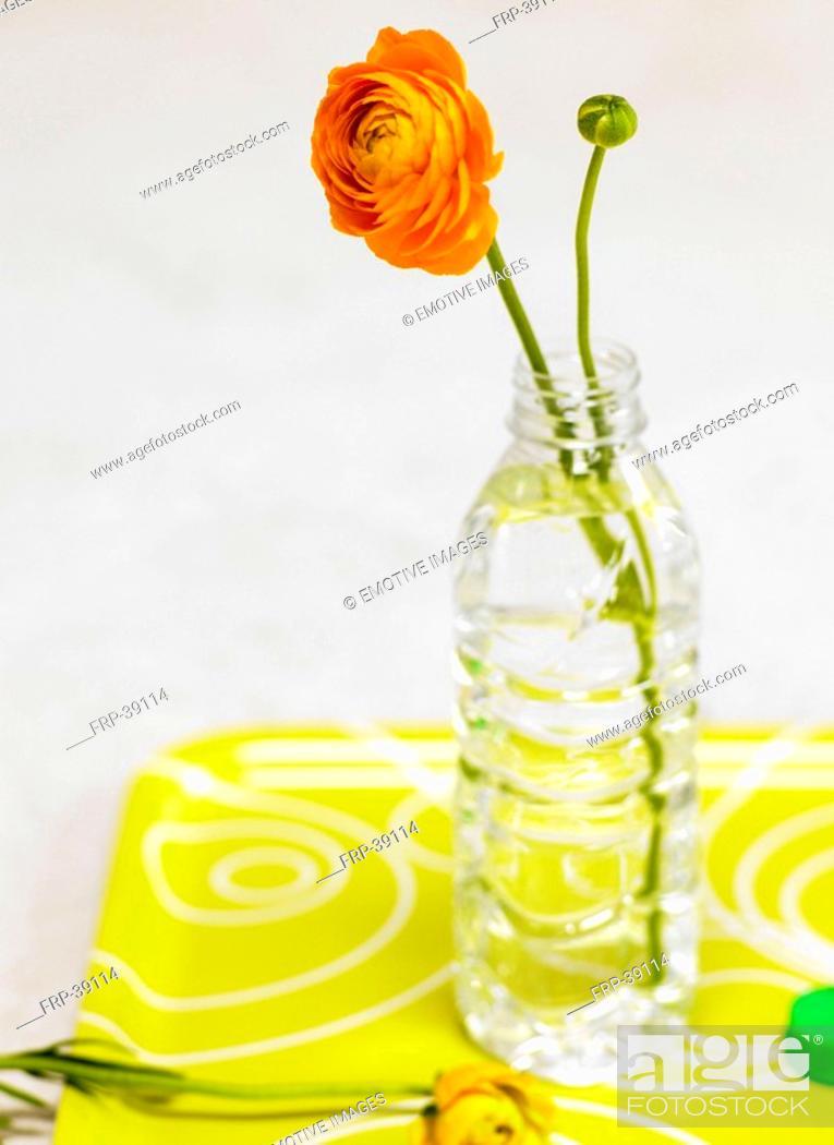 Stock Photo: orange buttercup.