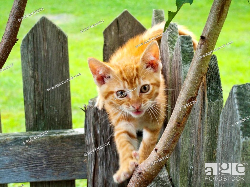 Stock Photo: kitten.