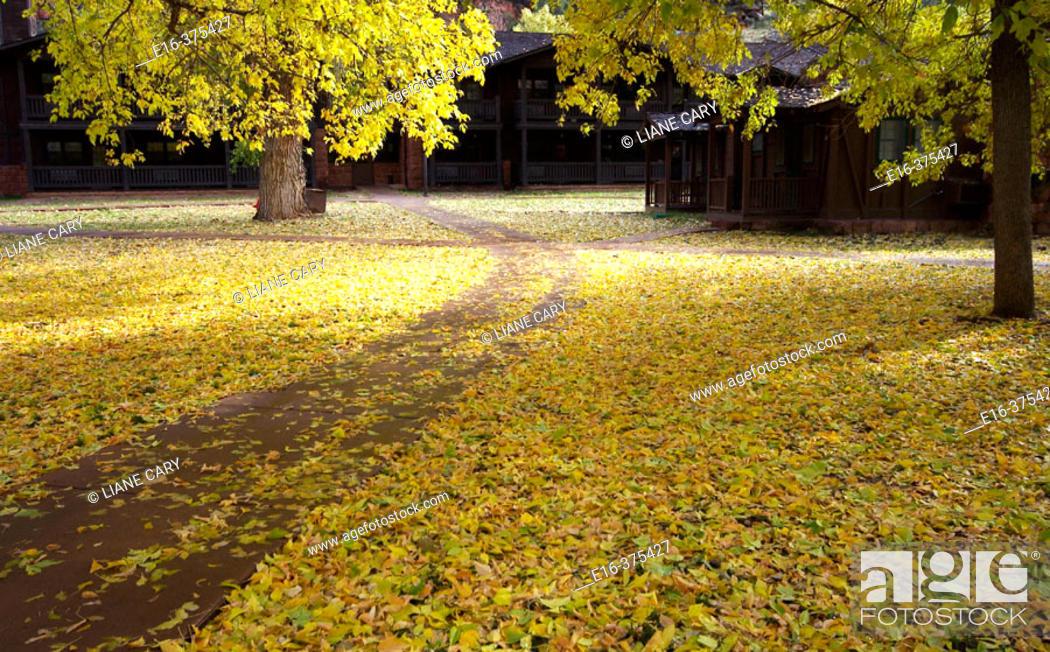 Stock Photo: autumn path.