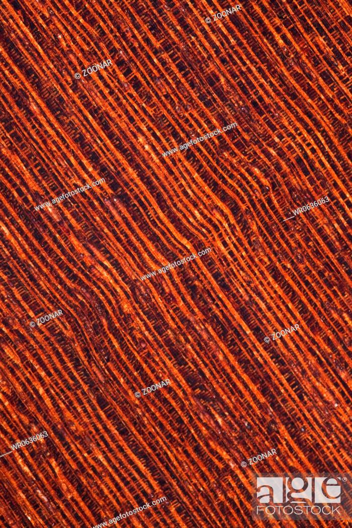 Stock Photo: background of wenge tropical timber.