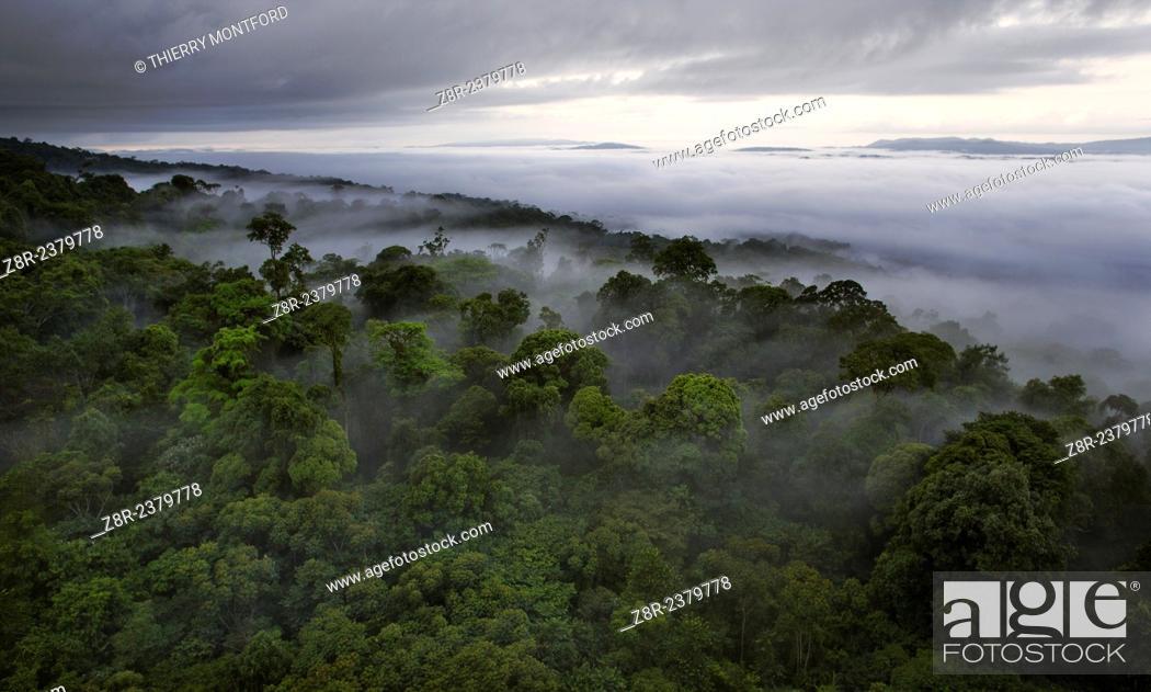 Stock Photo: Canopy in the rain season. French Guiana.