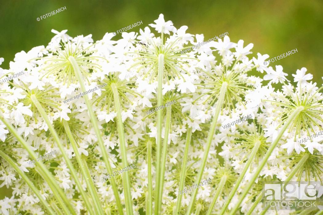 Stock Photo: Background, Beauty, Close-Up, Fields, Flora.