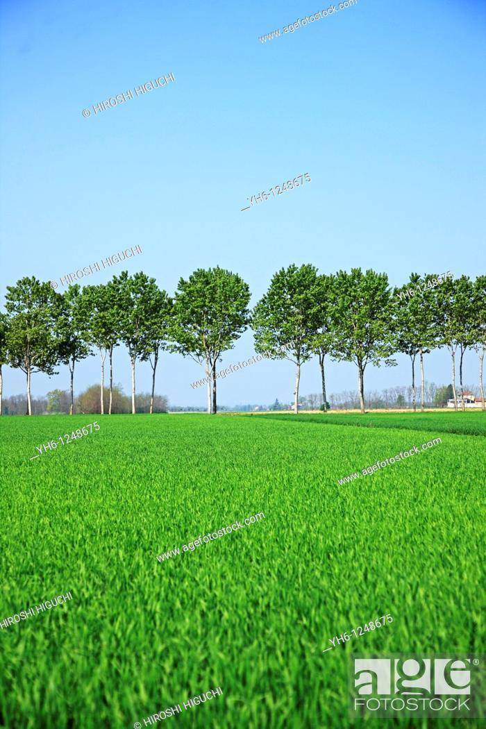 Stock Photo: Italy, Lombardy, trees.