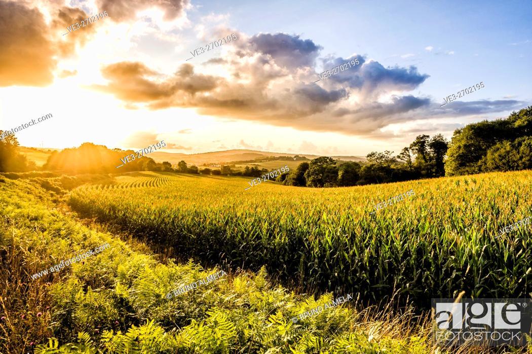 Imagen: Sunset over corn fields near Kerbolé (department of Finistère, region of Bretagne, France).